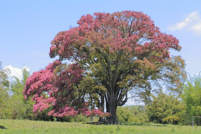 Homenagem da Natureza ao Outubro Rosa. Tribute in the nature into Pink October.