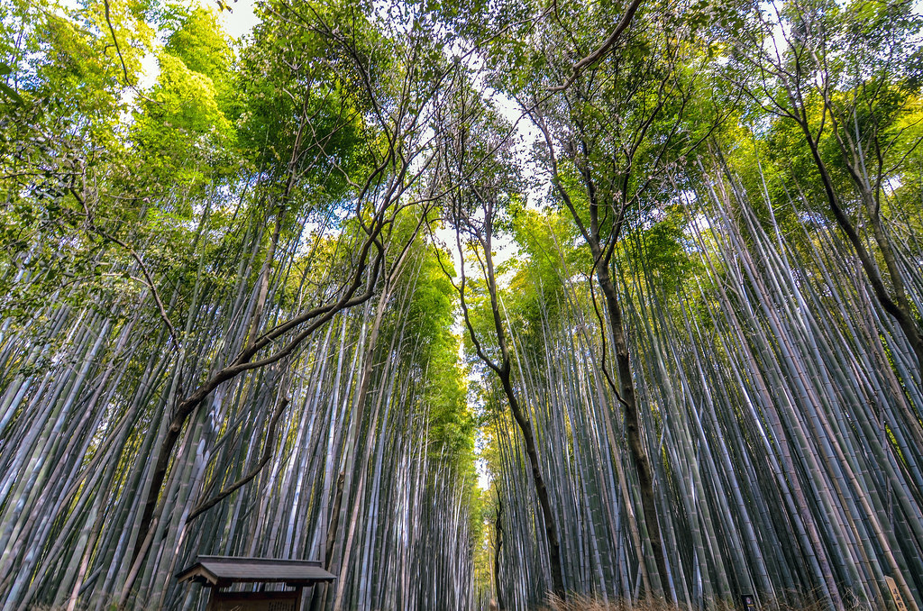 Bamboo grove top of path