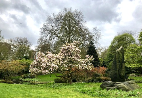 thedell hydepark london magnolia sculpure appleiphone8 april2018