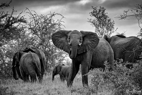 Elephant encounter   by MarkMeredith
