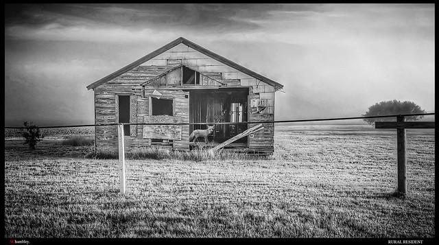 Rural resident