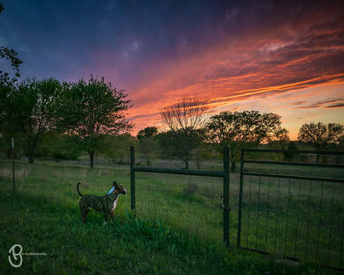 buffalohollow ctx sunset texas gatesville unitedstates us