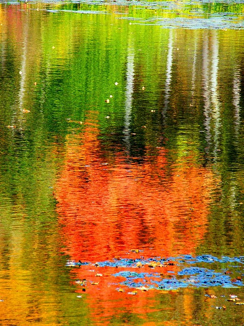 Fall Colorful Tree Reflection