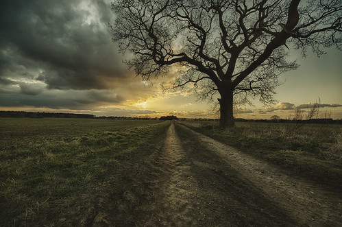 sky tree clouds sunrise nikon track sigma d7000 nikond7000 sigma816 darbians
