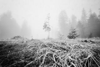 Misty Morning at Šumava | by martins63