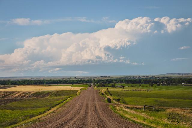 Prairie Summer, Valley County, MT