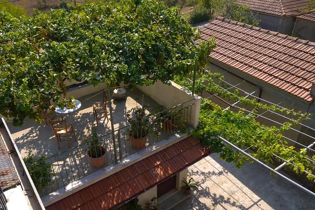 Grape vine shade.
