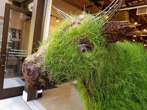 Grassy Cow