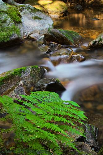 water beauty creek outdoors moss rocks idaho campground cda coeurdalene beautycreek mosscoveredrocks idahocoeurdalene idahobeauty shaynebphotography beautycreekinidaho creekthatfeedscoeurdalene creekincda beautycreeks colorsthatleadtofall