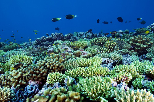Saving the Pacific Ocean | by East Asia & Pacific on the rise - Blog