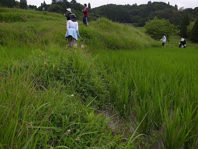 <p>d)私は釣り用の長靴持参だったので田んぼの中に入りながら田んぼの周りの草刈りしました。</p>