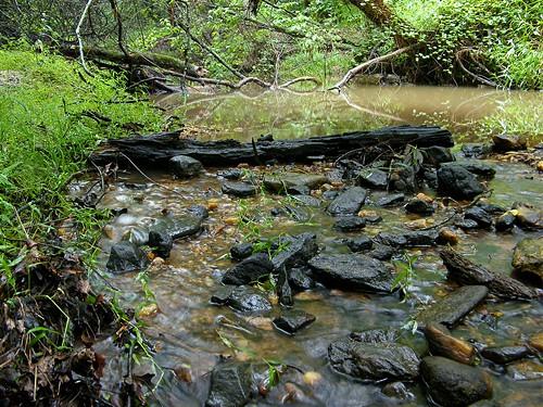 green nature water creek georgia landscape rocks stream logs