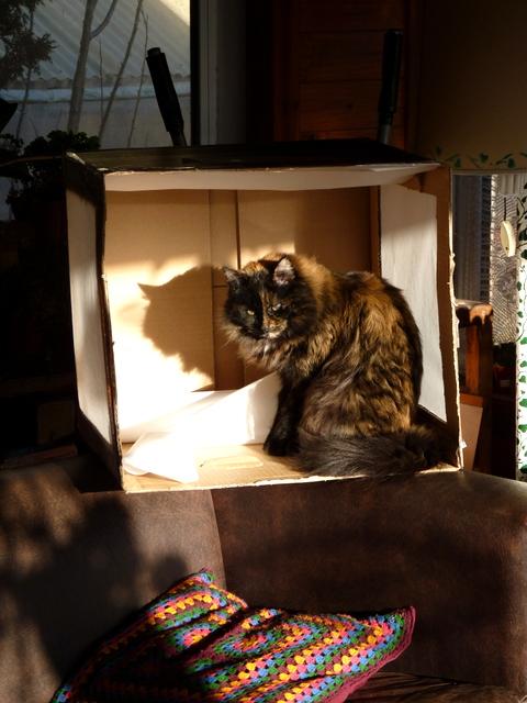 Live model in my new Light Box