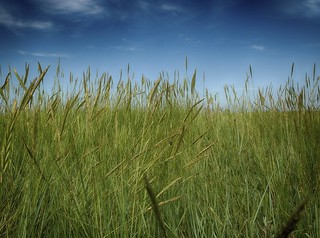 Peering Through The Long Grass | by A Guy Taking Pictures