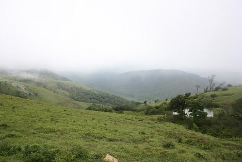 forest nilgiri bandipur monsoonscenery