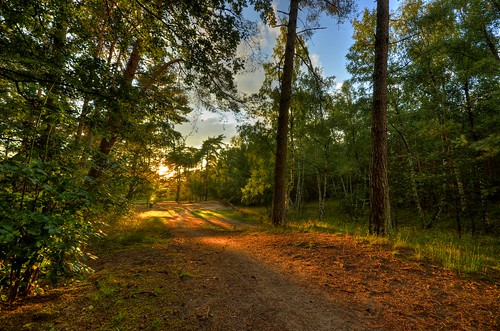 light sunset sun forest golden evening abend licht bomen woods shadows path pad schaduw wald schatten pinetrees schemering baume lutterzand thegalaxy flickraward dämmerung