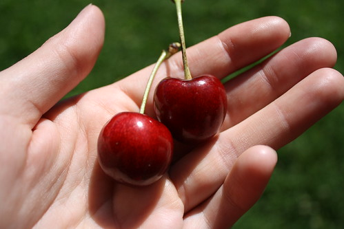 Stella Cherries | by sand_and_sky