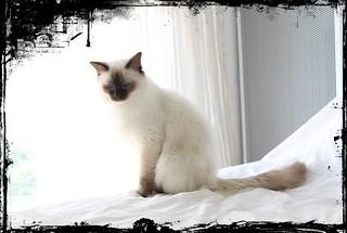 Cat | by wisista007