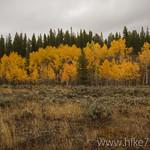 Sagebrush meadow in the fall