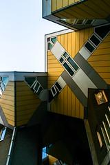 living as an urban roof