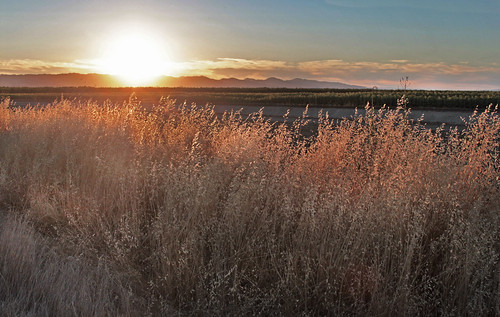 sunset grass explore allendale solanocounty