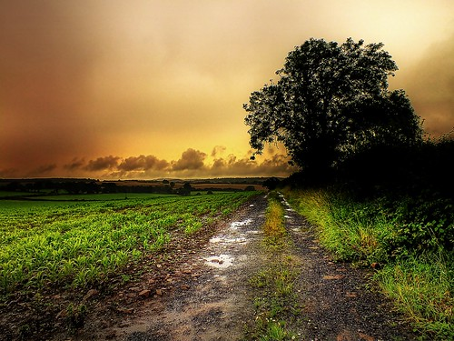 trees sunset summer color nature rain landscape perspectives array forestofdean mfcc bestcapturesaoi ericgoncalves elitegalleryaoi rememberthatmomentlevel4 rememberthatmomentlevel1 rememberthatmomentlevel2 rememberthatmomentlevel3 rememberthatmomentlevel5 rememberthatmomentlevel6
