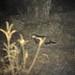 Civettictis civetta - Photo (c) Skip Russell, algunos derechos reservados (CC BY-NC-ND)
