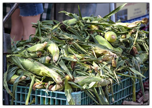 Non-GMO Sweet Corn