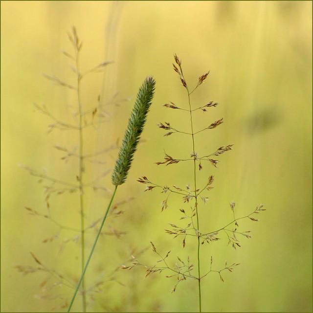 radiant simplicity