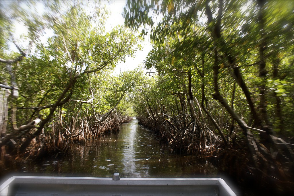 Airboat ride in the Everglades