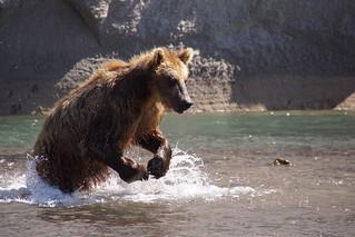 Bear Fishing | by deischi
