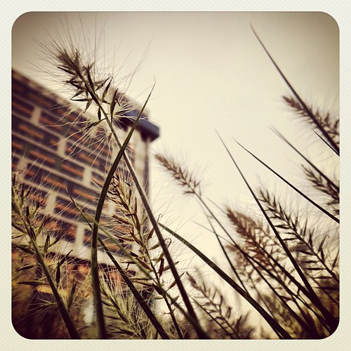 grass square view low hilton squareformat earlybird insta discoverygreenpark iphoneography instagram instagramapp uploaded:by=instagram foursquare:venue=4ac6e1b1f964a52084b620e3