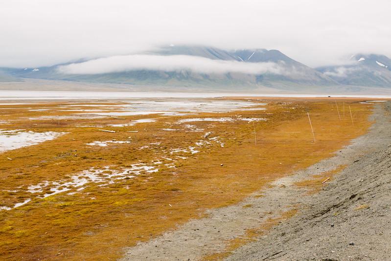 Arctic Tundra VII