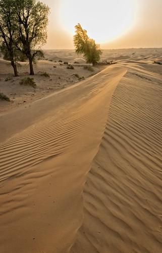 Sand dunes | by Tigra K