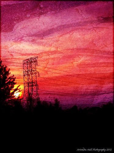 iphone4 iphoneonly iphone instagram artondrahallphotography artondra artondrahall tree treescapes treescape trees
