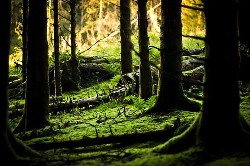 trees fern colour green forest moss northernireland