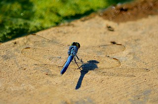 Dragon Fly | by raowen