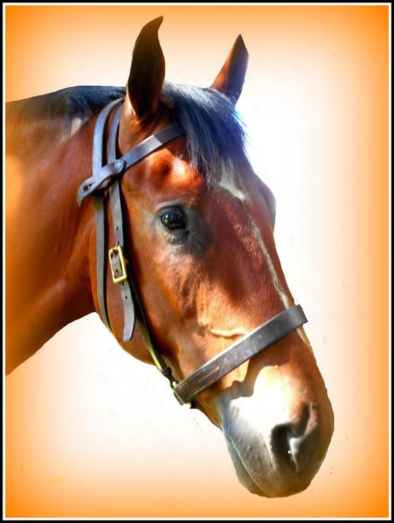 Cavalry Horse ..