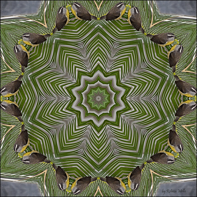 Bird's kaleidoscope