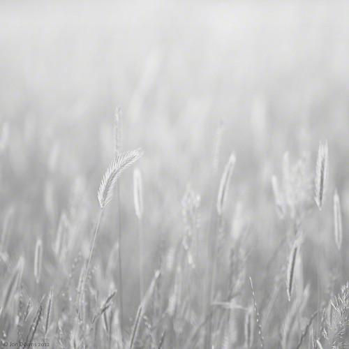 bw white black art field digital canon downs photography eos grey photo high jon key flickr artist photographer image gray picture meadow pic photograph 7d highkey thornborough brightfield jondowns brightfieldlightingnot