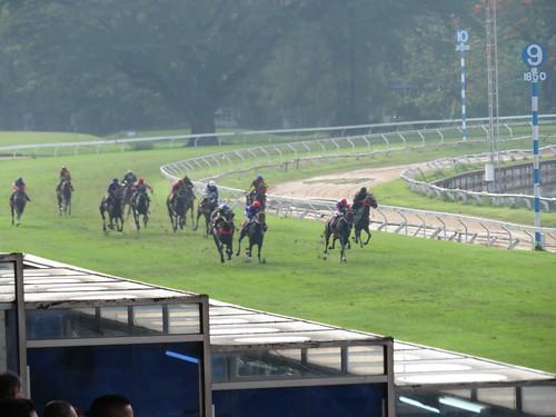 タイの競馬場で4角をまわて直線に入る各馬