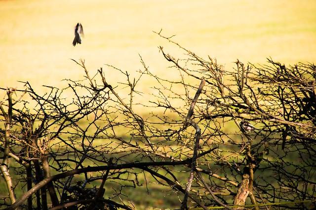 Malvern_Birds