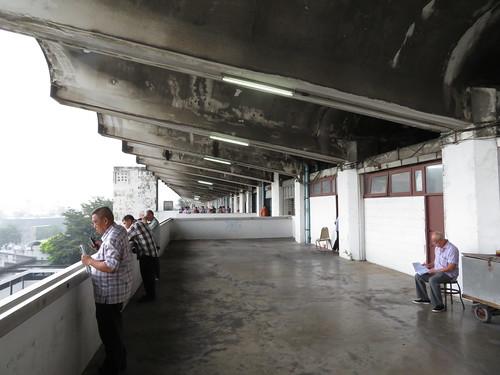 ロイヤルターフクラブ競馬場5レースの装鞍所を眺める人々