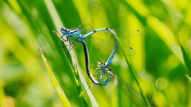 Dragonfly - 5117