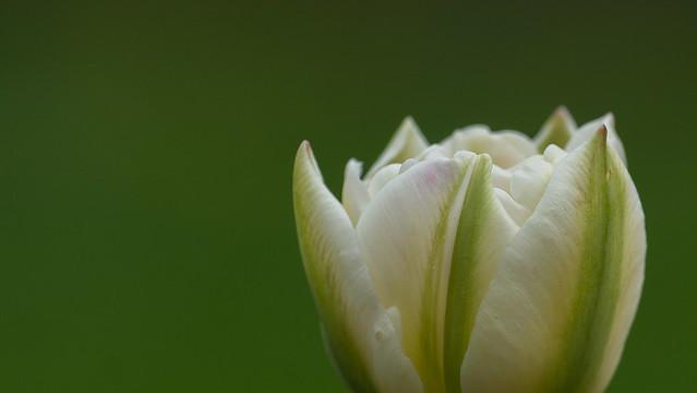 Blossom  09634