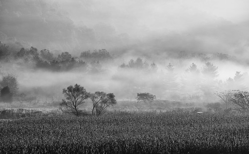 vallecrucisnc northcarolina naturephotography naturallight earlymorning fog sunlight misty field mcm pentax 50135mmf28lens f56 blackandwhite