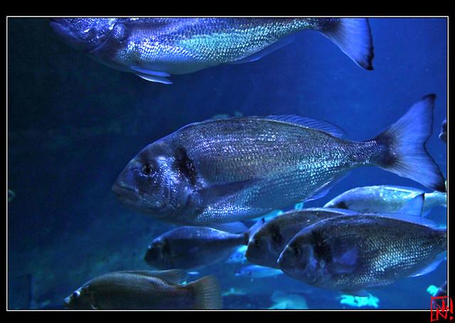 Aquarium de Paris 8/10