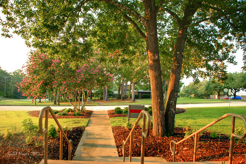 morning flowers tree photography earlymorning scenic sidewalk ralph hdr signed mtc crepemyrtle reedhall rhm vrider vrider97 midlandstech rhmphotography