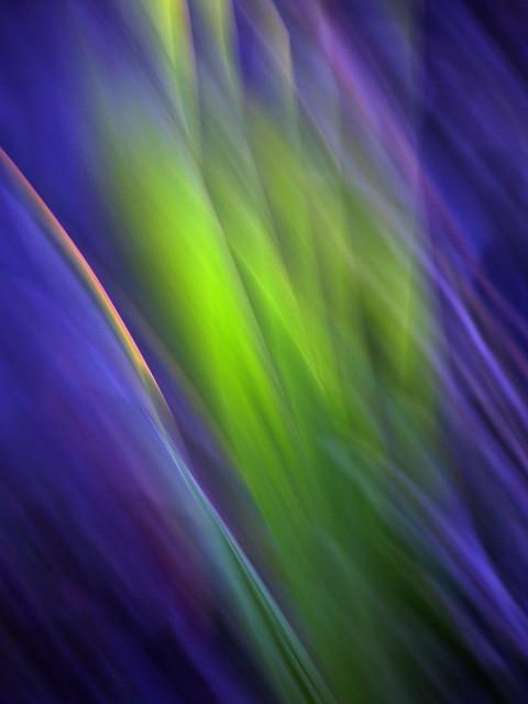 Evening garden blur
