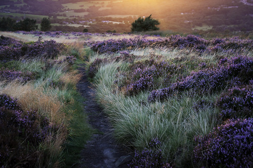 light sunset england orange sunlight colour nature beauty landscape evening glow path heather derbyshire august grasses moor moorland coombes charlesworth